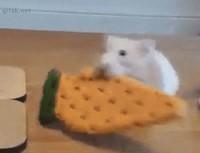 Ho, un biscuit !
