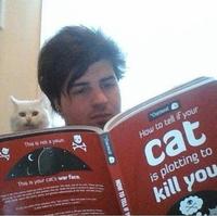 Que faire si votre chat est en train de comploter votre mort
