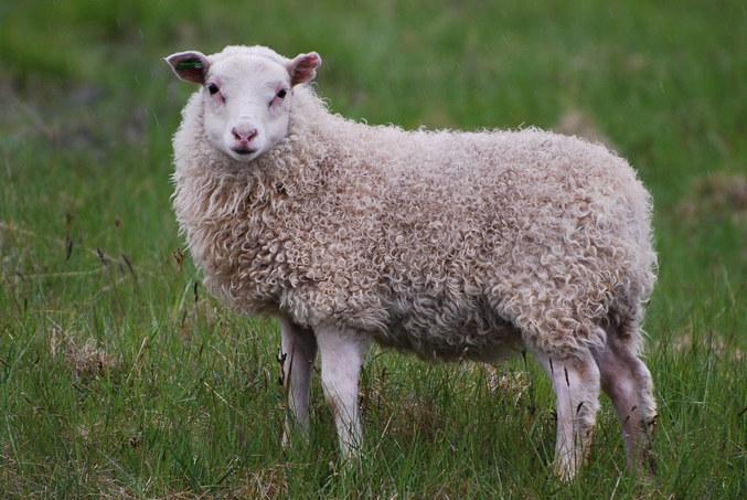 """""""Cherche pas, t'aurais posté un mouton, ça aurait fait un scandale pareil..."""" http://lelombrik.net/80885#c1157568  Dans un but scientifique, je me dois de tester."""