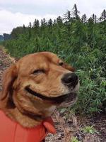 Snoop Dogg à la campagne