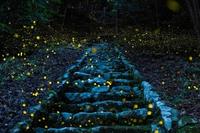 Escalier aux lucioles