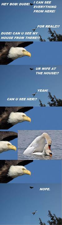Un aigle et un cygne discutent