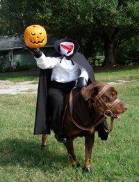 Costume pour chien