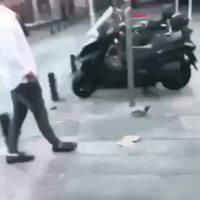 Les pigeons, ces dangereux volatiles