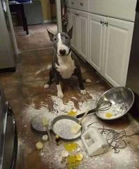 J'ai voulu te faire des crêpes ...