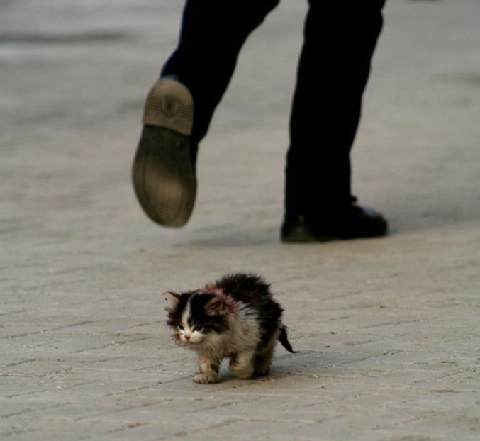 Si vous ne voulez pas d'animaux domestiques, n'en adoptez pas pour les abandonner.