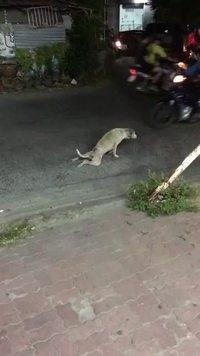 Un chien blessé bloque la circulation