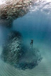 Danse avec les loups (de mer)