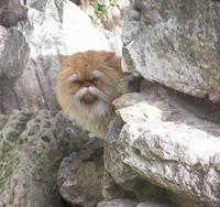 Si les chats devaient apprendre le kung-fu ...