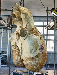 Coeur de baleine