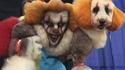 Caniche clown