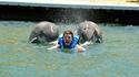 Poussette effectuée par 2 dauphins