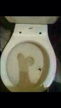 Y'a une saleté d'araignée dans mes toilettes
