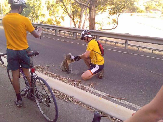 Tour de France ou d'Australie ?