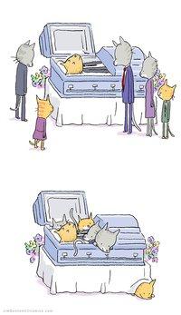 Cat funeral
