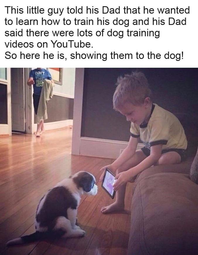 Le garçon voulant apprendre à dresser un chien, son père lui a dit qu'il y avait plein de tutoriels Youtube sur le sujet. Il a donc commencé le dressage en lui montrant les vidéos.