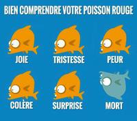 Guide du poisson rouge