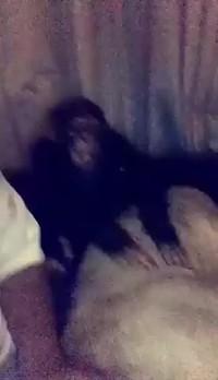Le roi des animaux