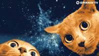 Du LSD et des chats dans l'espace