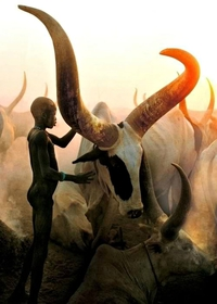 Dinka Boy with Namesake Ox