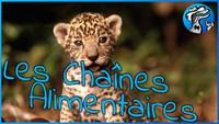 1ère vidéo : Vulgariation scientifique - Goana - Les Chaines Alimentaires !