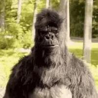 Un gorille en forme...