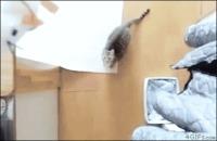 Saut de chat