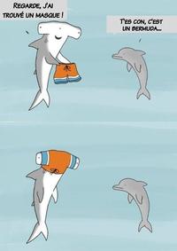 Un dauphin et un requin