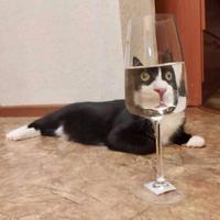 Un verre, ça va
