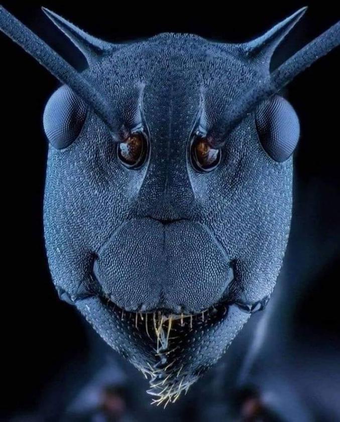 au microscope électronique