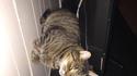 Un chat bien installé