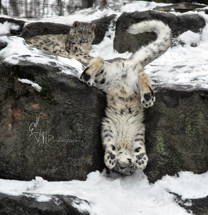 Il paraît que ce n'est plus une espèce en danger d'extinction, mais le doute subsiste...