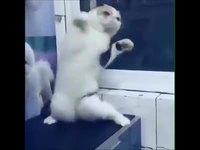 Tou m'es la mousique et chat danse