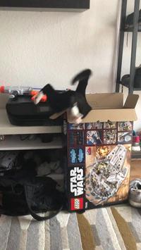 Un chat, une boîte