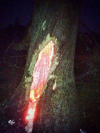 Un arbre frappé par la foudre