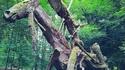 Sculpture dans les bois