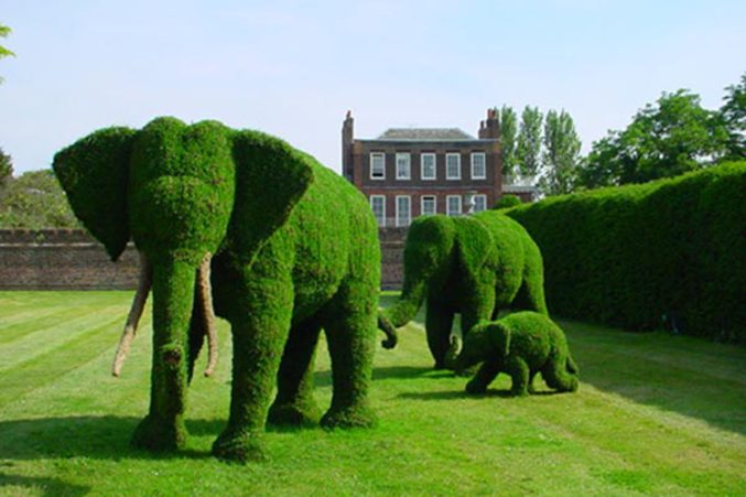 Buisson l phant - Taille des rosiers buisson ...