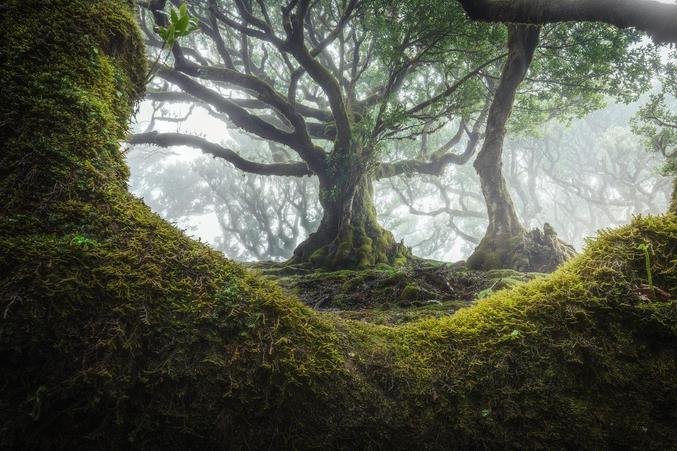 Photo d'un arbre prise à Madeire. (J'ai commencé à chercher à qui créditer la photo puis j'ai eu la flemme)