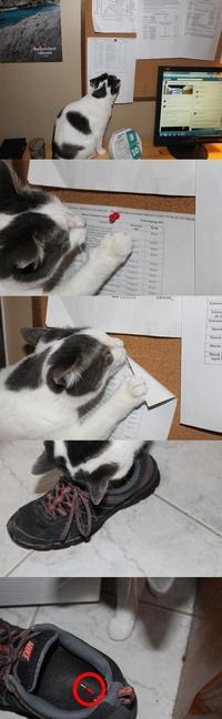 Le complot des chats : encore une preuve !
