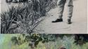 Claude Monet à Giverny (été 1905)