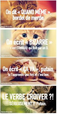 Des chatons pour vos amis