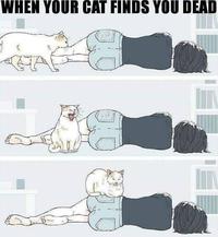 Kan ton chat te trouve mort