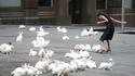 À l'instar de la place Saint-Marc envahie par les pigeons à Venise...