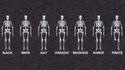 Différents squelettes