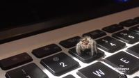 Une araignée polie