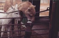 QCM : Le chameau et l'enfant