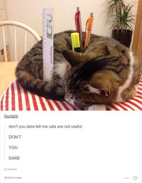 Chat pot à crayon