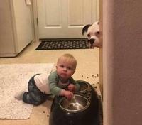 Donnez à manger au bébé le chien