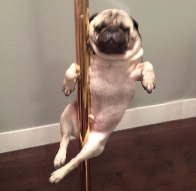 Un pole dance qui met en chien ces messieurs.