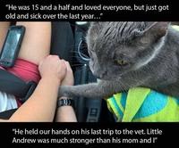 Un chat courageux